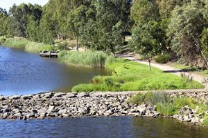 Torrens River Wetlands